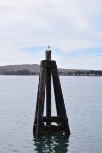 Bodega Bay (107)