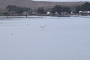 Bodega Bay (33)