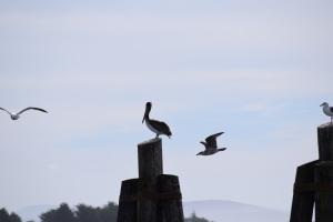 Bodega Bay (55)