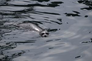 Bodega Bay (74)