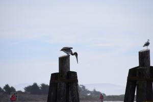 Bodega Bay (95)