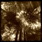 Colonel Armstrong Redwoods sepia