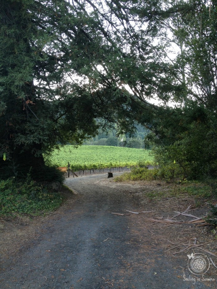 Trail to Pig Palace