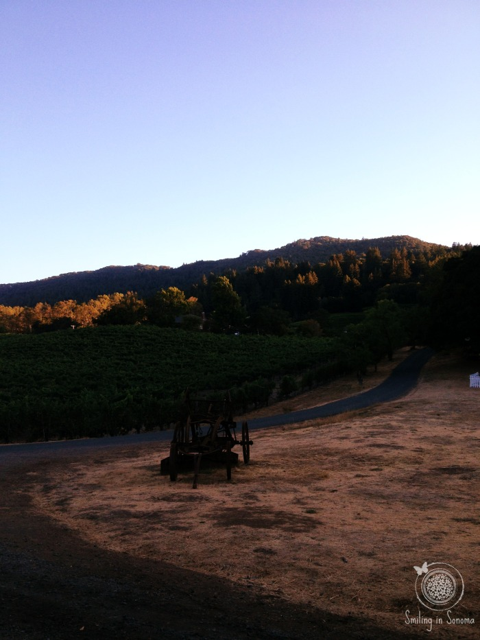 Trail along the vineyard