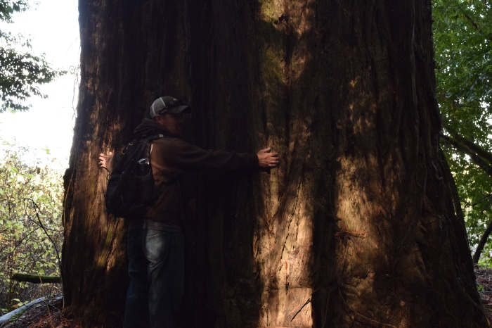 Giant Redwood, Seriously! Can't even hug it all the way around!