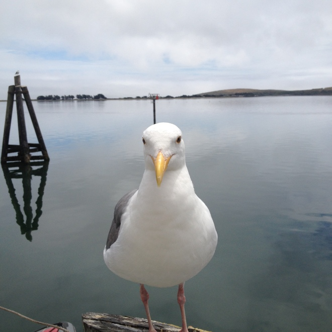 Welcoming Committee ChairGull