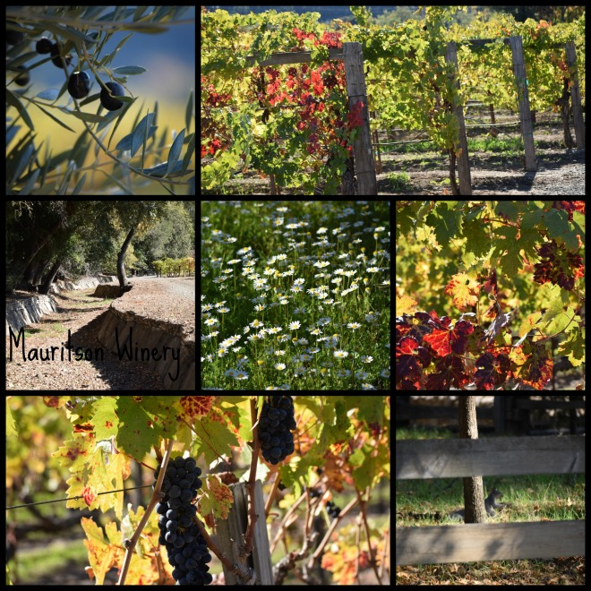 Mauritson Winery Dry Creek Valley Sonoma, CA
