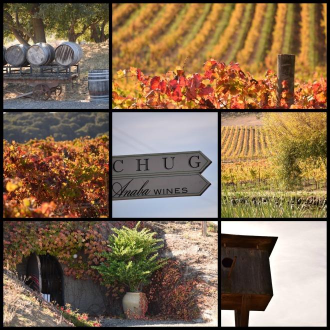Schug Winery Sonoma,  CA