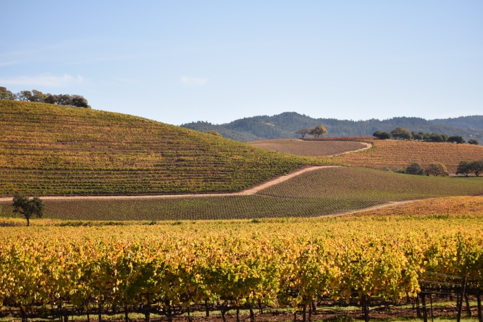 Kunde Winery Sonoma Valley same spot, slightly different position Nikon D3300 f/5.6 1/500 ISO-100