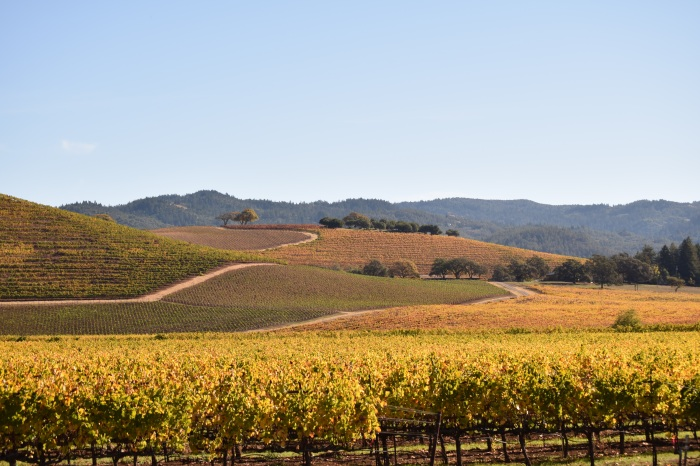 Kunde Winery - Sonoma Valley while standing on the my seat  Nikon D3300 f/5.6 1/500 ISO-100