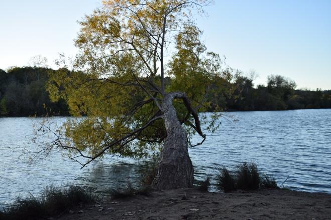 spring lake (10)